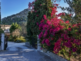Alcudia - finca with lots of fruit trees, lots of views. She invites YOU. A price with a lot of perspective.
